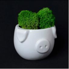 Набор для выращивания Экочеловеки Eco мини-капшо Минипиг